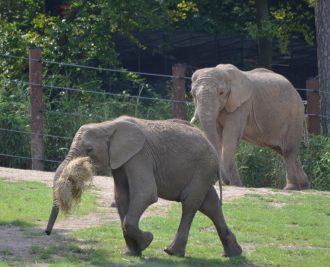 elefantenfuehrung-opel-zoo