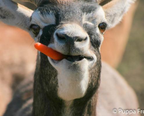 Gewinnt Tickets für einen tierisch-tollen Tag im Opel-Zoo!