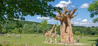 Opel-Zoo-Titelbild