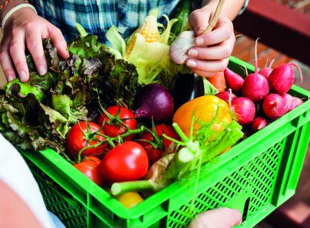 Bio-Lieferservice statt Supermarkt-Schlange? Mitmachen und gewinnen!