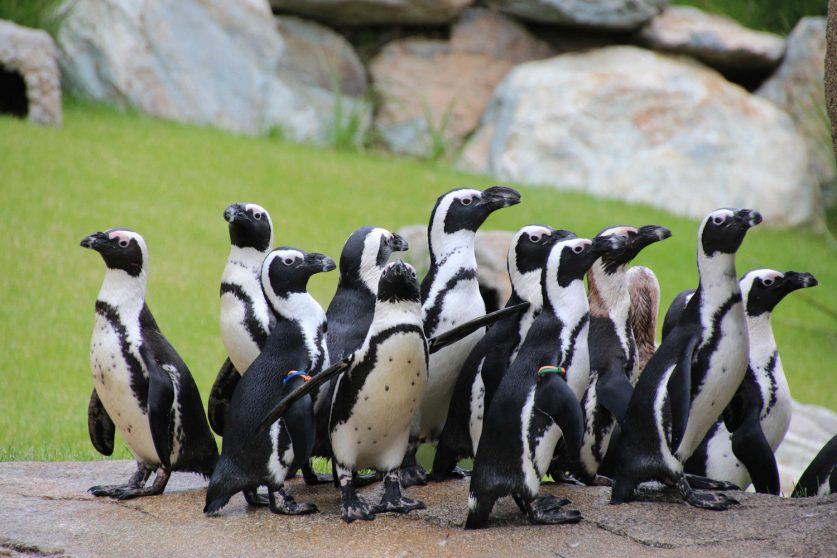 fuehrung-pinguine