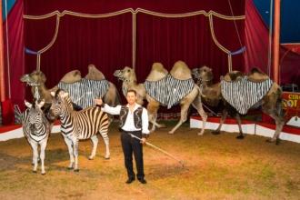 Circus Rolina
