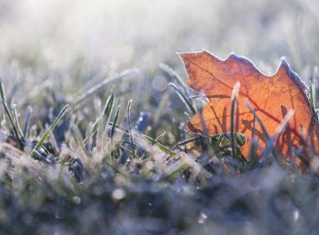 Wie Ihre Pflanzen den Winter überstehen