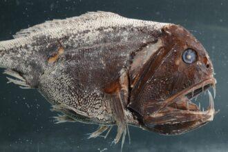 ausstellung-tiefsee-meeresforschung