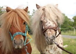 pony-lernbauernhof-sindlingen