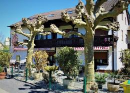 jessicas-ponderosa-sulzbach